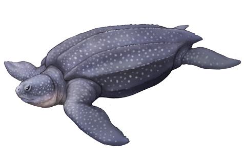オサガメの画像 p1_30