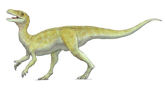 グアイバサウルス(Guaibasaurus )・川崎悟司イラスト集