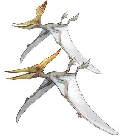 プテラノドン(Pteranodon)・川崎悟司イラスト集