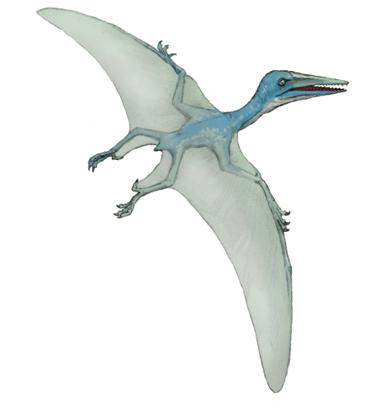 プテロダクティルス(Pterodactylus)・川崎悟司イラスト集